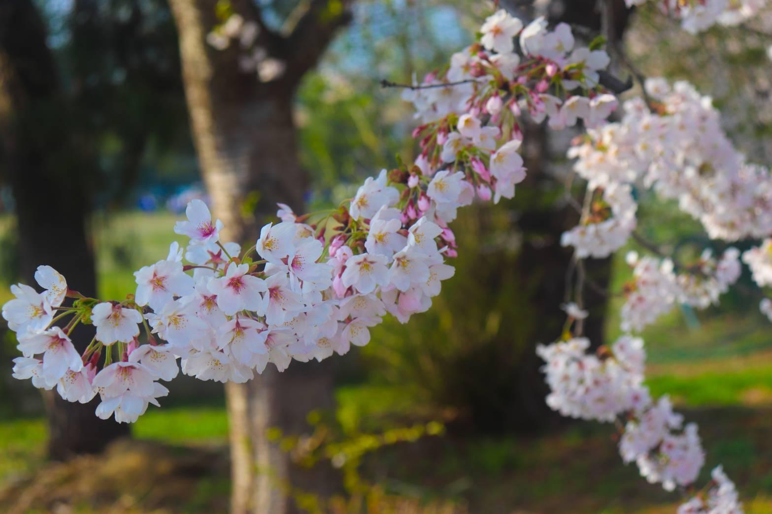 【スタッフゆるブログ】春です、ふくです、はじめまして。